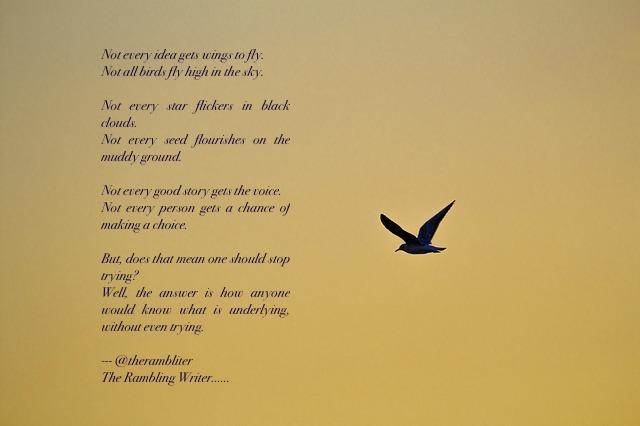 bird-1573948_640